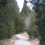 CedarPath_web