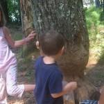 Pulaski Park – July 22