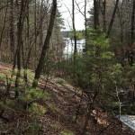 woods-web