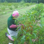SKLT Chestnut Orchard – May 15