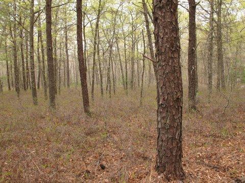 carterwoods